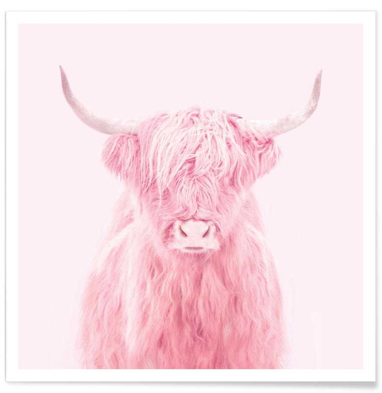 Vaches Highland, Humour, Highland Cow affiche