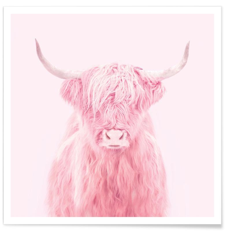 Highland Køer, Humor, Highland Cow Plakat