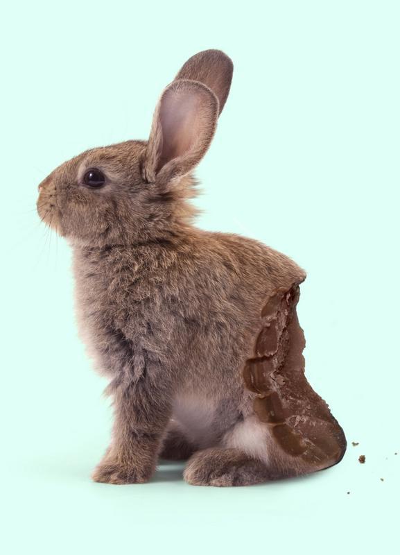 Chocolate Rabbit Canvas Print