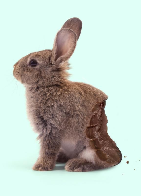 Chocolate Rabbit -Leinwandbild
