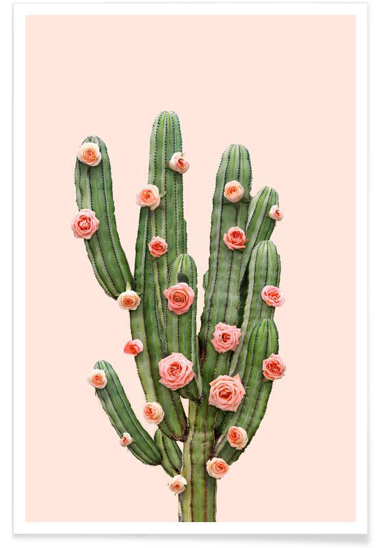 Cactus, Félicitations, Feuilles & Plantes, Photographie de roses de cactus affiche