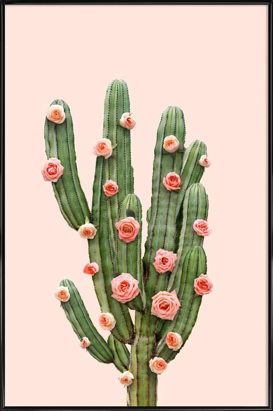 Cactus Roses Poster i standardram
