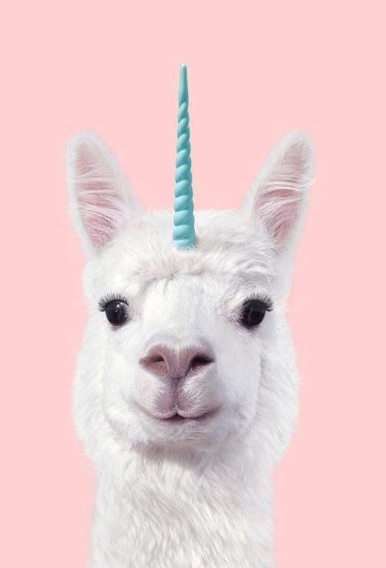 Alpaca Unicorn Acrylic Print
