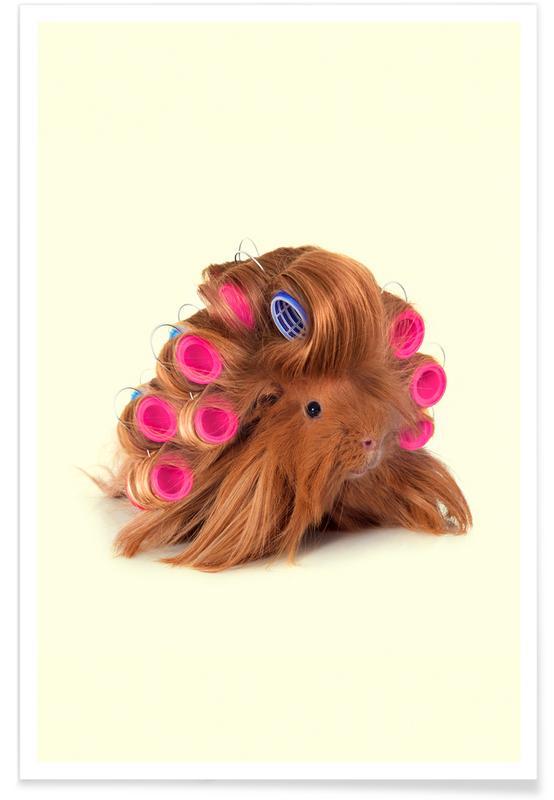 Lustig, Curly Guineapig -Poster