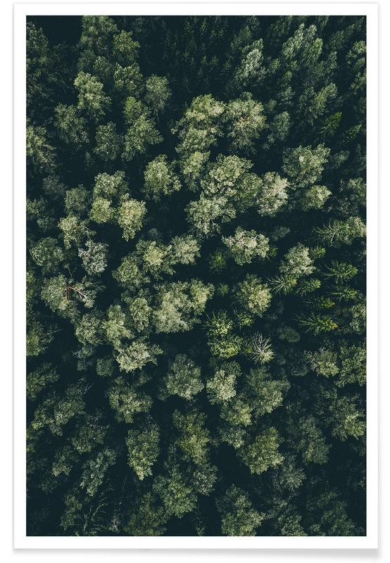 Wald-Luftaufnahme -Poster