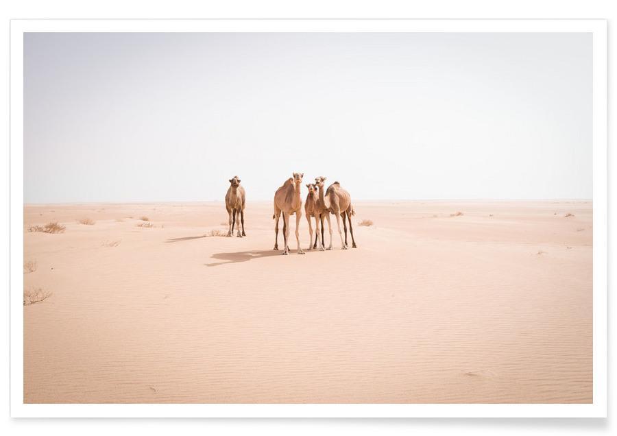 Deserts, Camels Sahara Poster