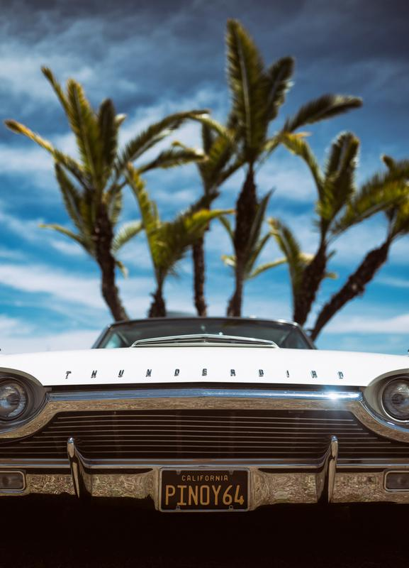 Tropic Thunderbird toile