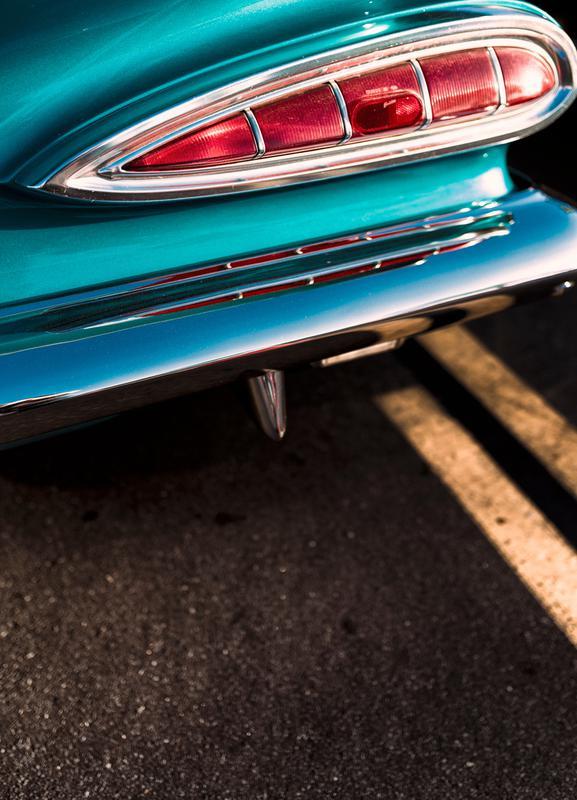 Impala Colors Canvas Print