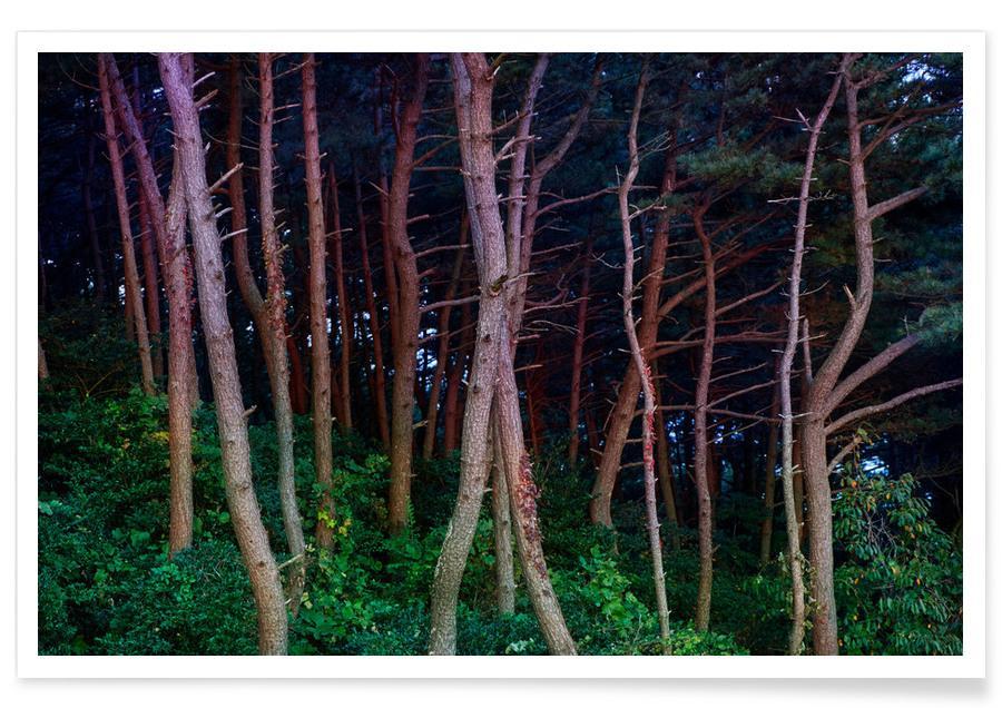 Forêts, Arbres, Busan Trees affiche