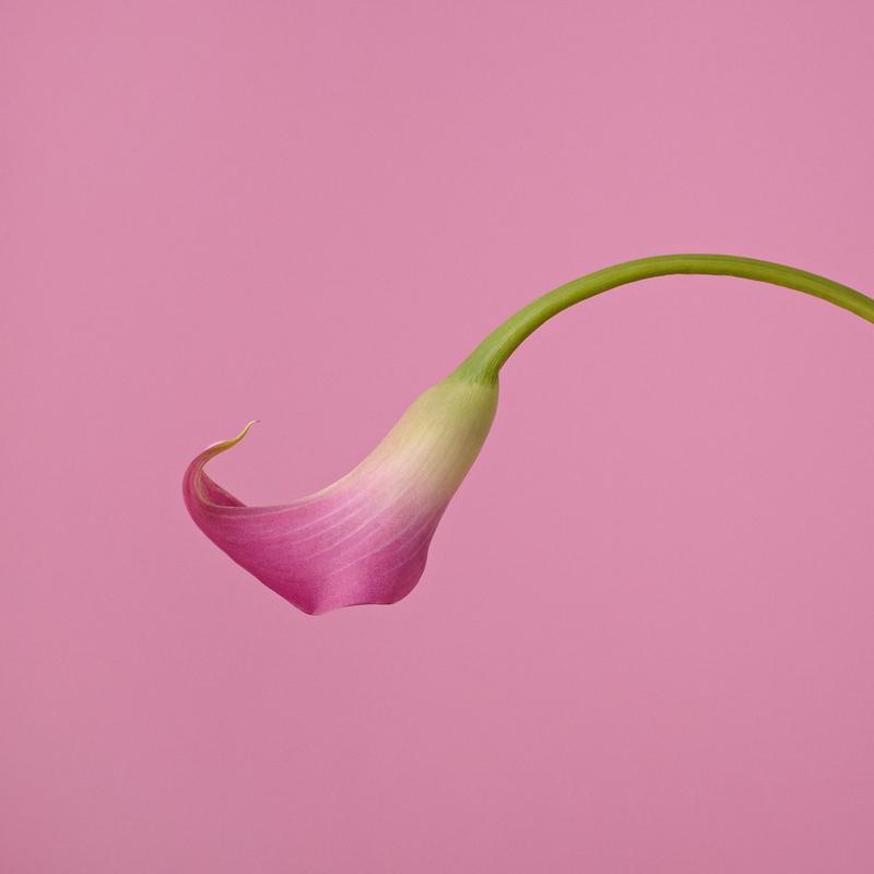 Pink canvas doek