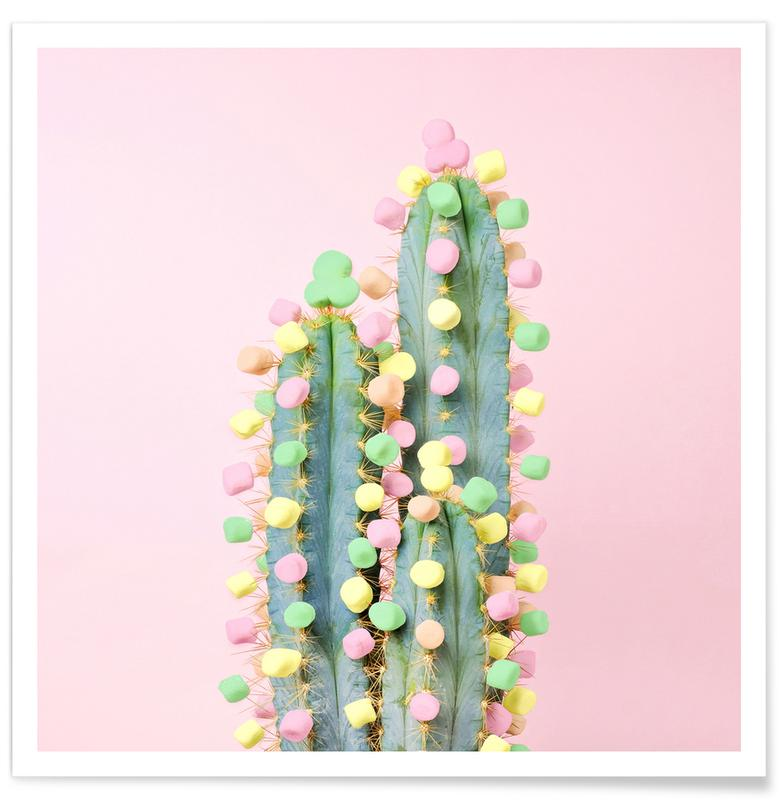 Marshmallow Cactus in Bloom Poster