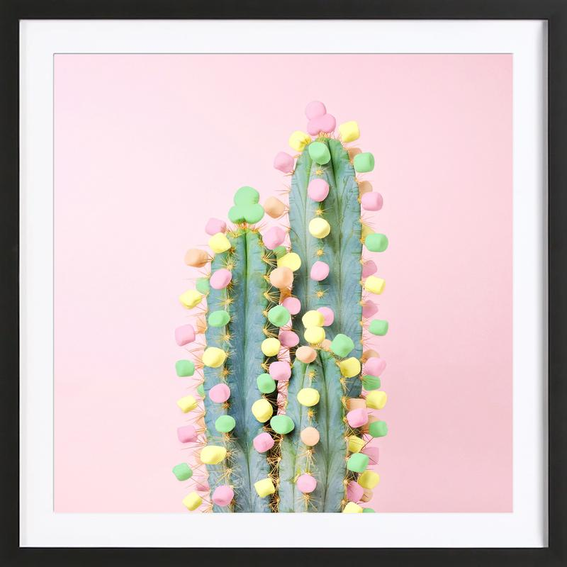 Marshmallow Cactus in Bloom ingelijste print