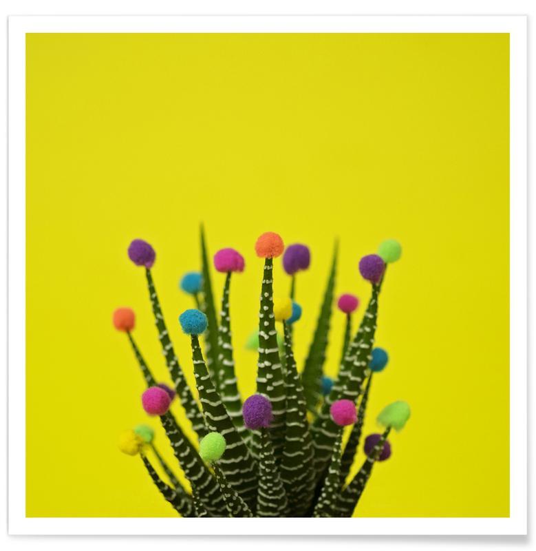 Haworthia in Bloom affiche