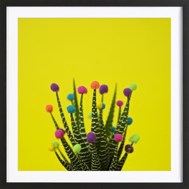 Haworthia in Bloom Framed Print