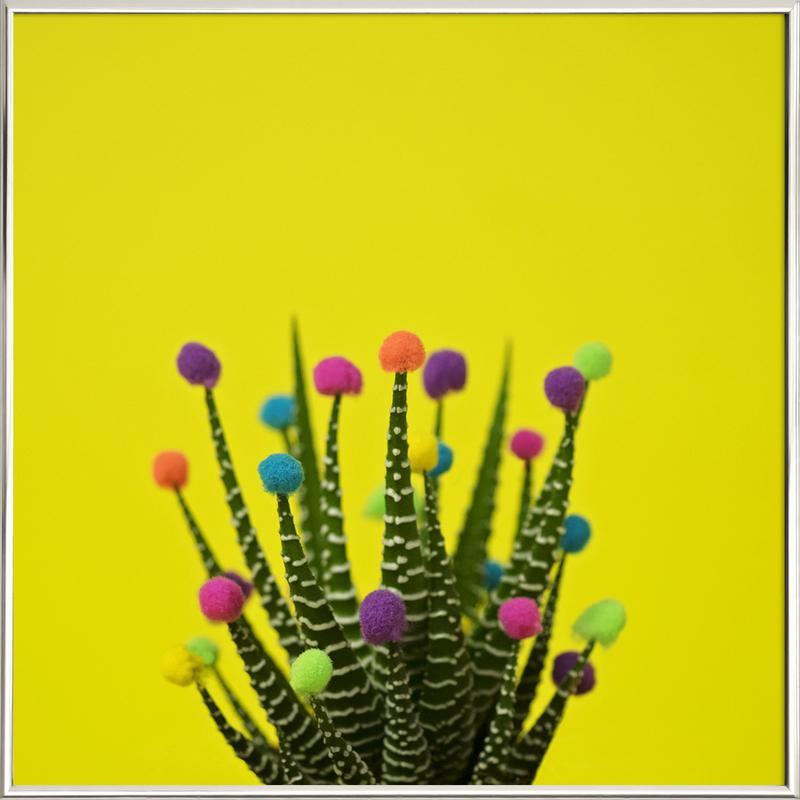Haworthia in Bloom -Poster im Alurahmen