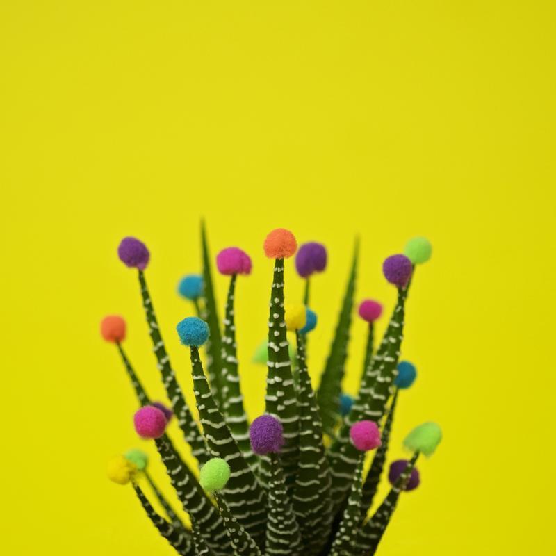 Haworthia in Bloom -Acrylglasbild