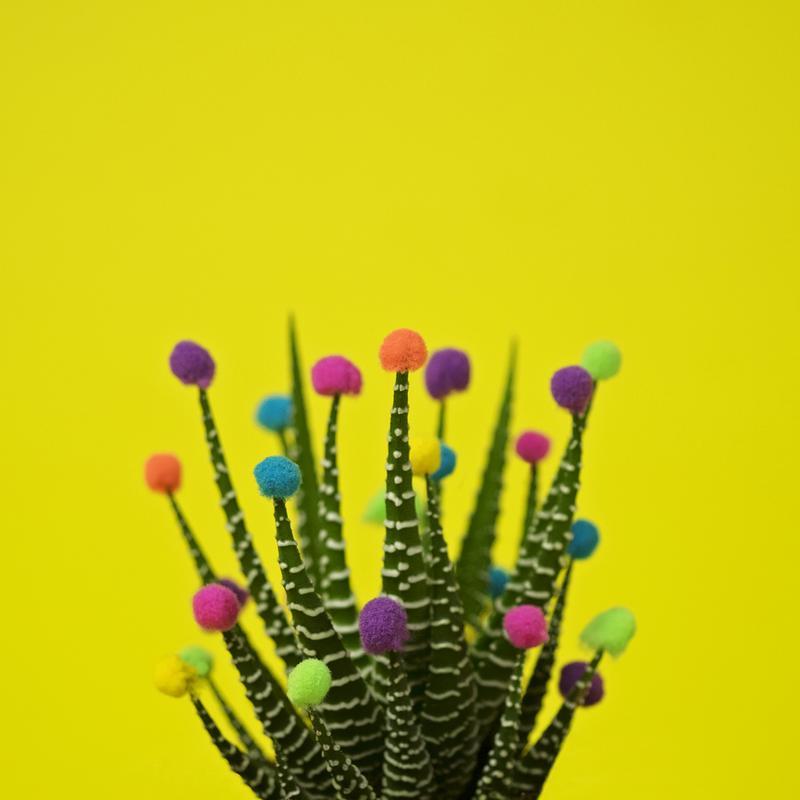 Haworthia in Bloom tableau en verre