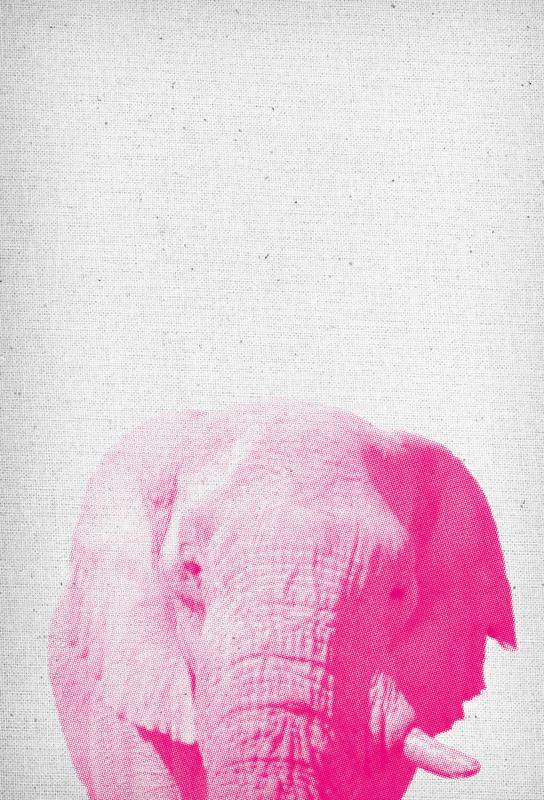 Elephant 02 Aluminium Print
