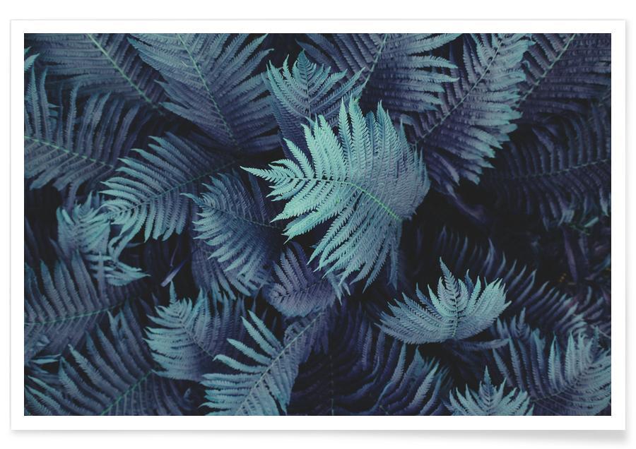 Blätter & Pflanzen, Farn 01 -Poster