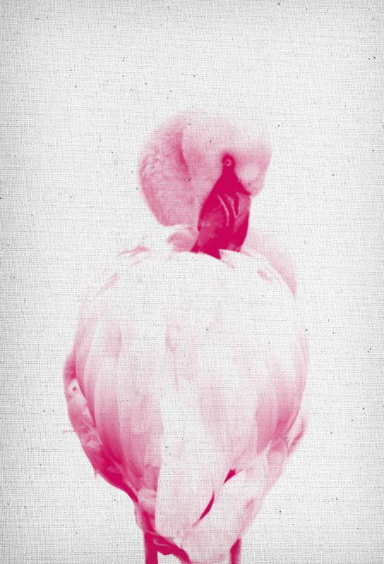 Flamingo 02 acrylglas print