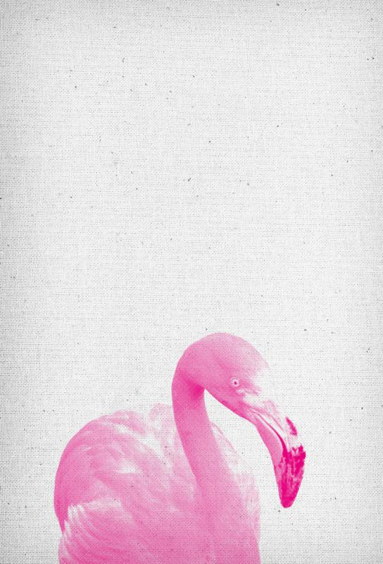 Flamingo 03 acrylglas print