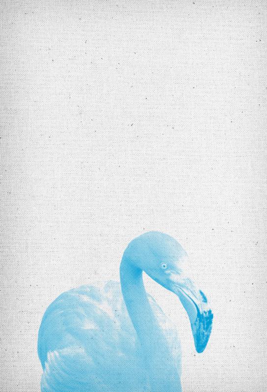 Flamingo 04 acrylglas print