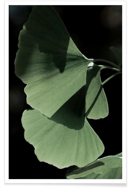 Blätter & Pflanzen, Ginkgo 03 -Poster