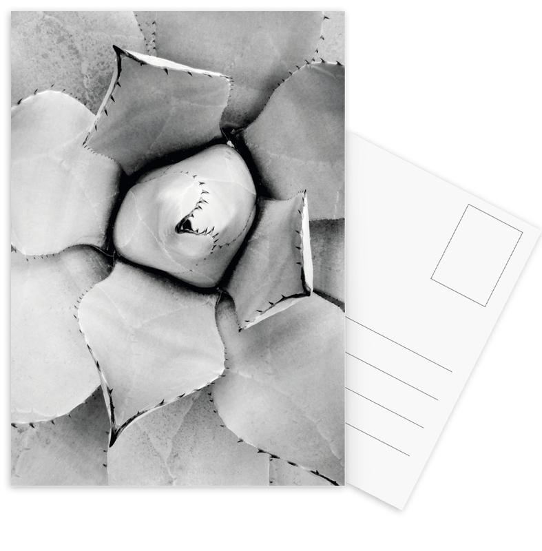 Agave Postcard Set