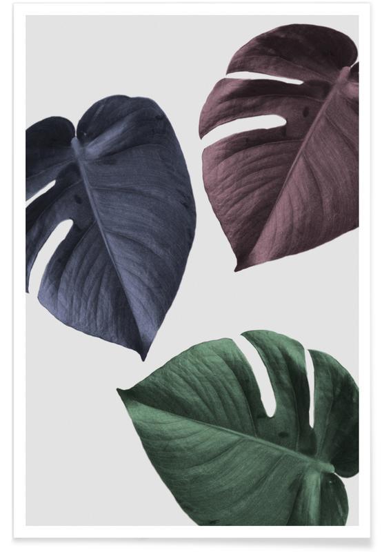 Blätter & Pflanzen, Monstera 02 -Poster