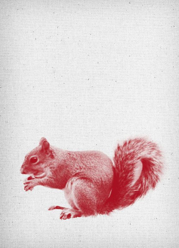 Squirrel canvas doek