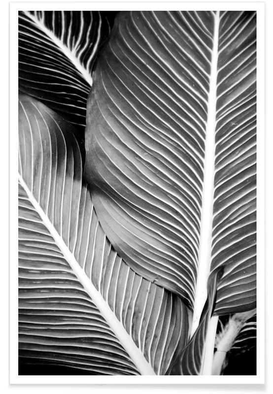Schwarz & Weiß, Blätter & Pflanzen, Tropical Leaves -Poster