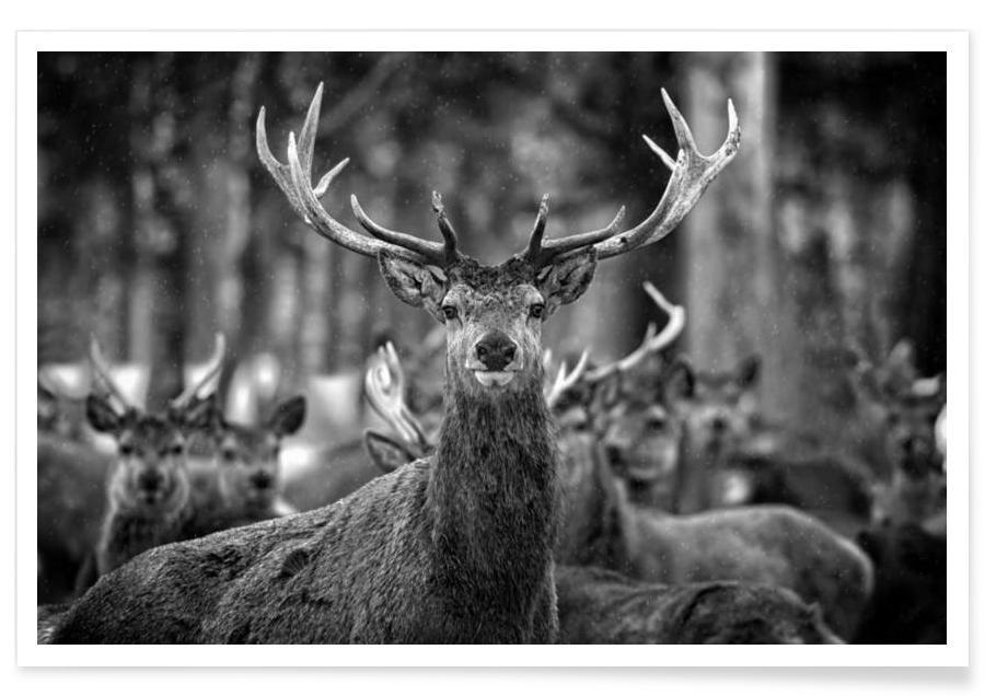 Black & White, Deer, The Stag Poster
