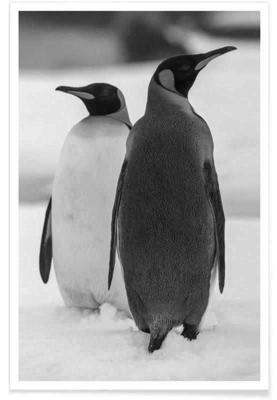 Sort & hvidt, The Penguins Plakat
