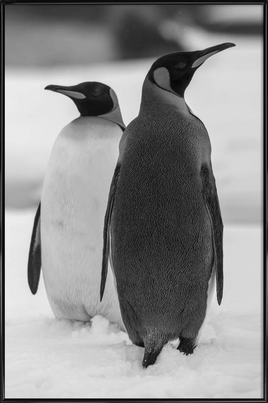 The Penguins -Bild mit Kunststoffrahmen
