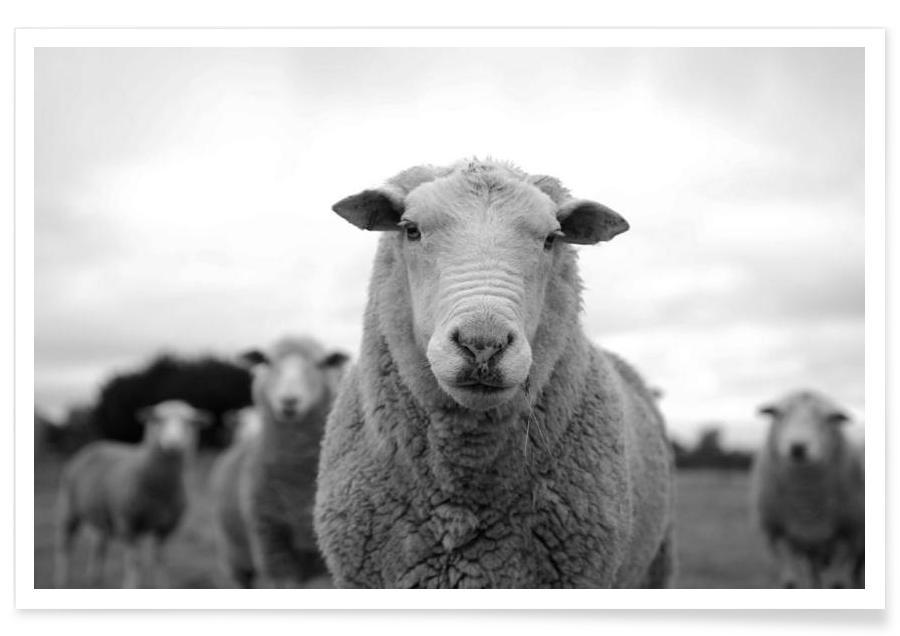 The Sheep Plakat