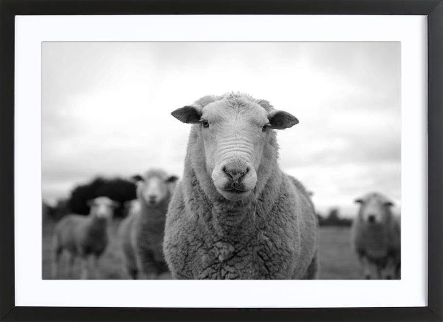The Sheep -Bild mit Holzrahmen