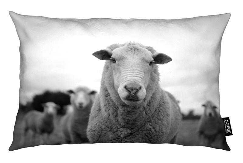 Schwarz & Weiß, Schafe, The Sheep