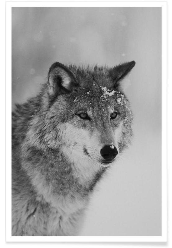Sort & hvidt, Ulve, The Wolf Plakat