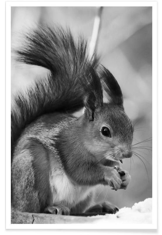 Noir & blanc, Ecureuils, The Squirrel affiche