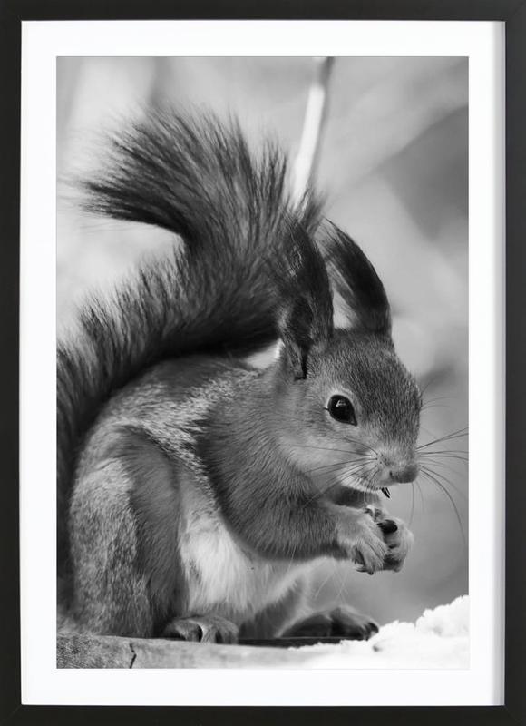 The Squirrel Poster i träram