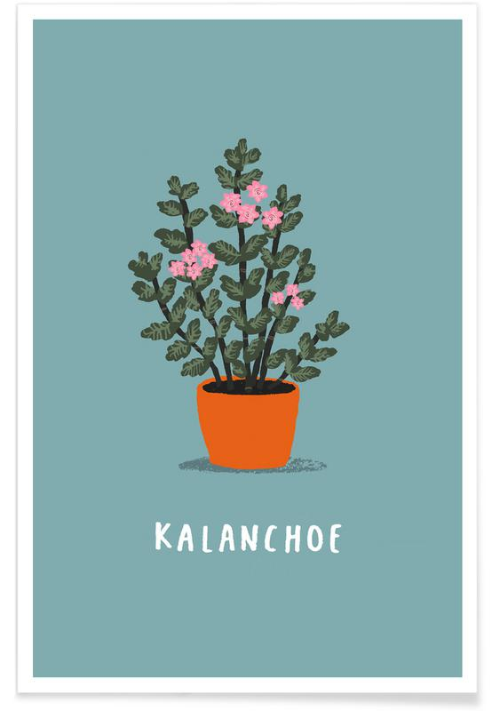 Kalanchoe -Poster