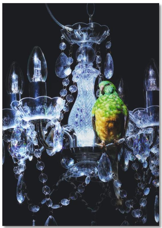 Parrots, Birds Everywhere 3 Notebook