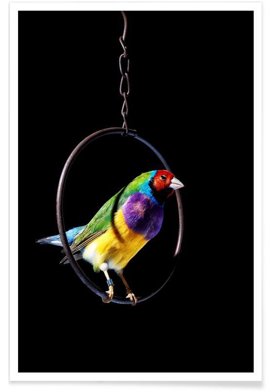 Kanarieöarna, Birds Everywhere 4 Poster