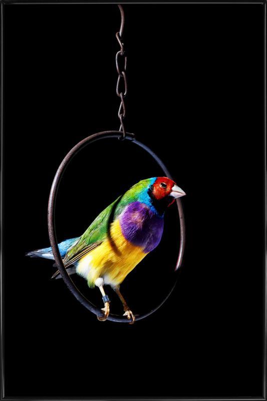 Birds Everywhere 4 ingelijste poster
