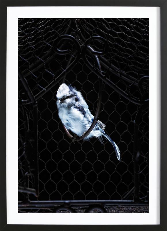 Birds Everywhere 5 Framed Print