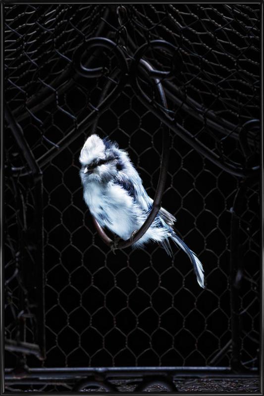 Birds Everywhere 5 Framed Poster