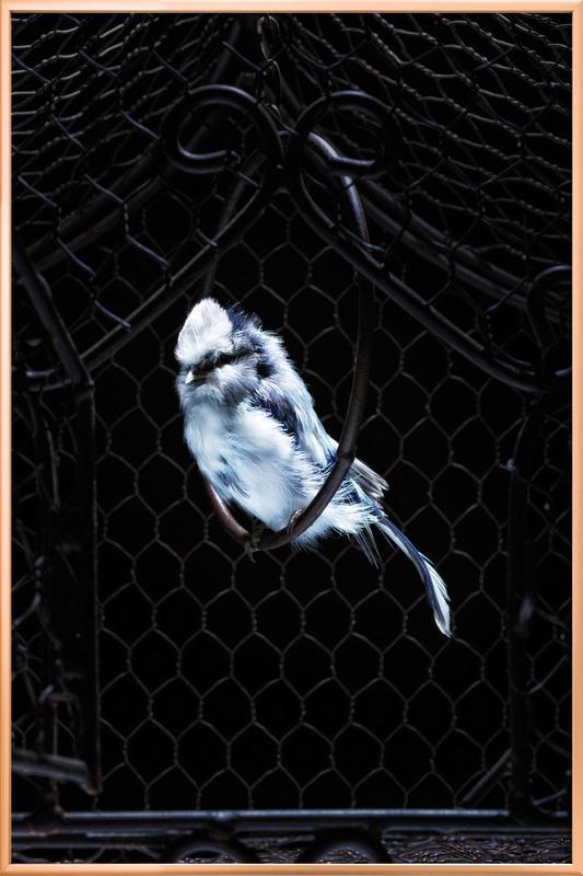 Birds Everywhere 5 Poster in Aluminium Frame