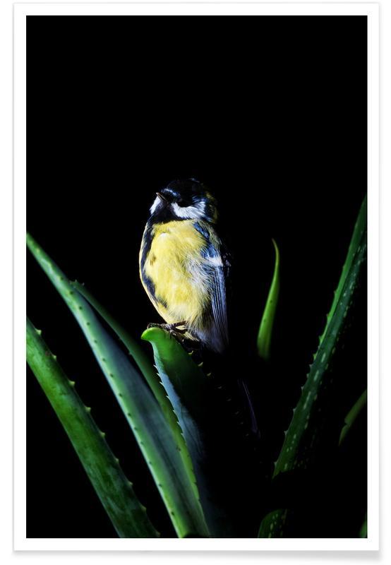 Canaris, Birds Everywhere 6 affiche