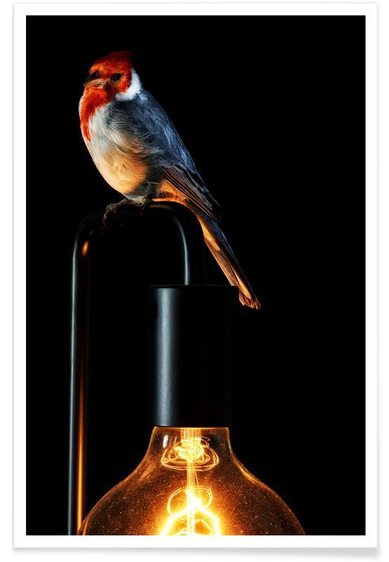 Canaris, Birds Everywhere 7 affiche