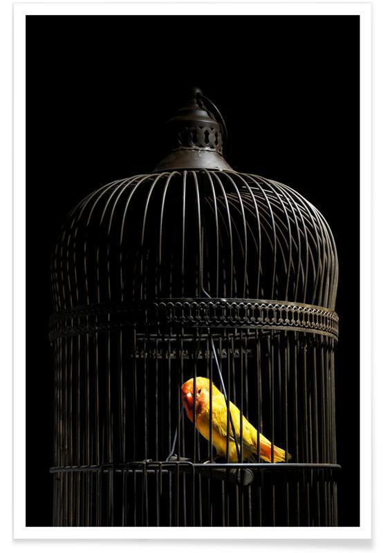 Kanaries, Birds Everywhere 8 poster